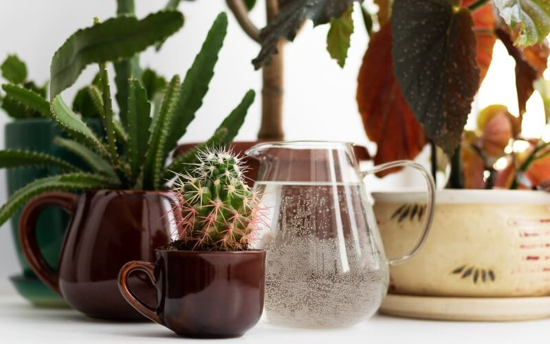 How to water succulents