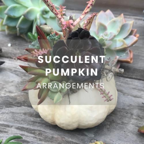 Succulent Pumpkin Arrangement