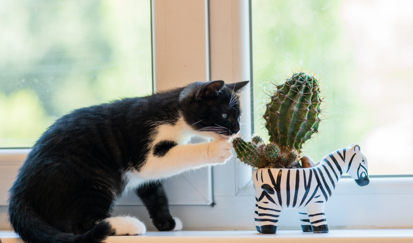 Are cactus poisonous to cats?
